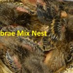 Fibrae Mix Nest