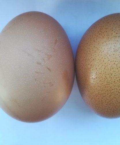 een ei met witte dotjes na Ovo Mix geven
