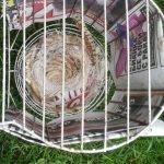 Het nest van de lizard kanaries